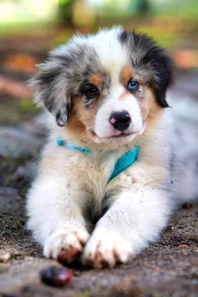 The Rabies Vaccine for Puppies is the Law in the United States