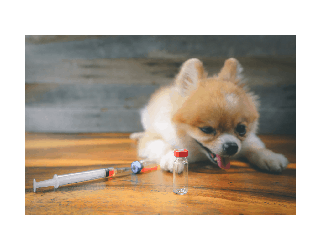 Rimadyl Dosage for Dogs The Science Behind The Side Effects