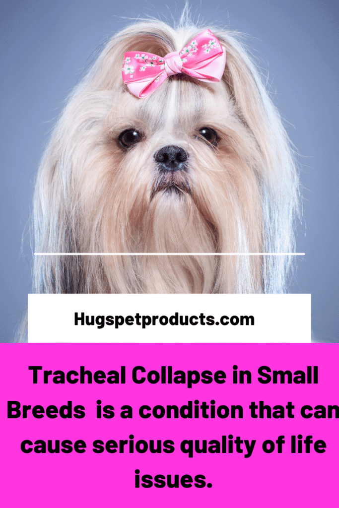 Tracheal collapse in dogs can affect quality of life