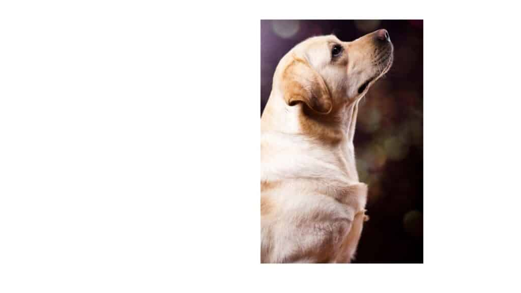 Tracheal Collapse in Dogs must be treated