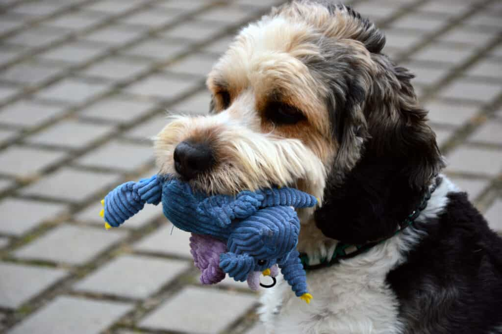 Swallowed Toys can cause coughing and gagging in dogs