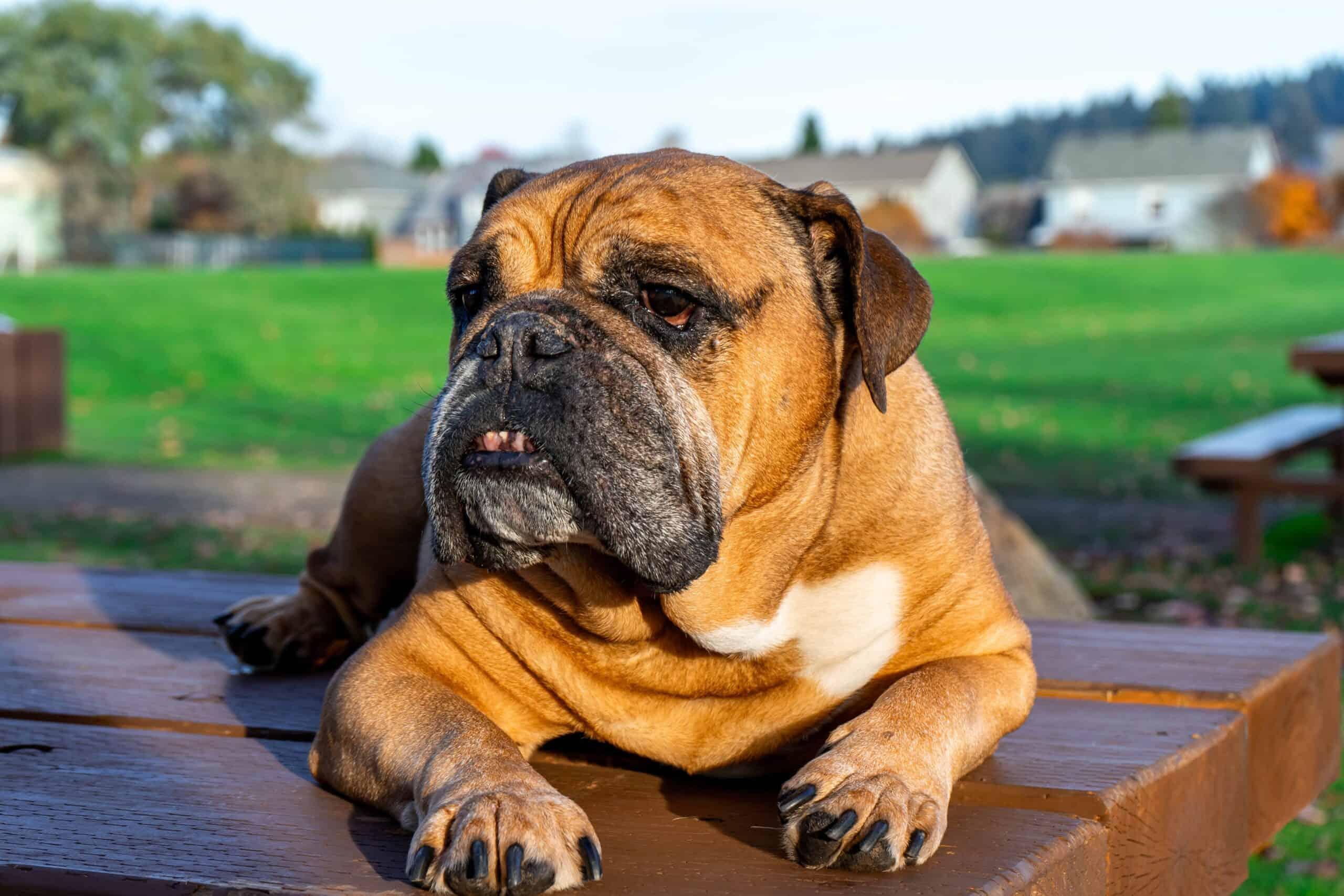 Always use a safe zyrtec dosage for dogs