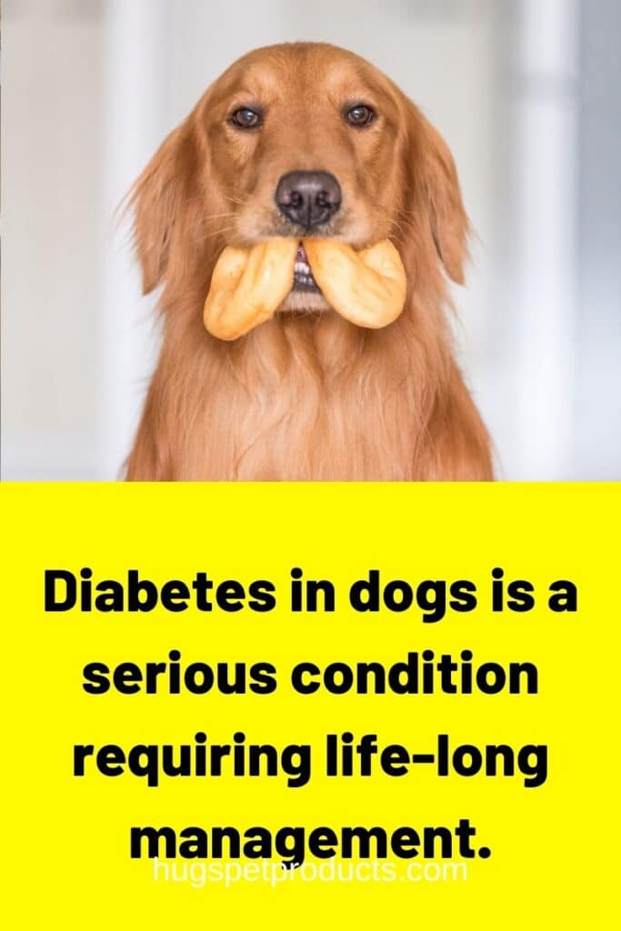 Diabetes in dogs is a serious condition.