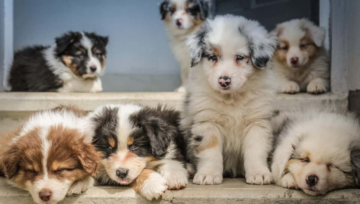 Puppies can easily contract coccidia.