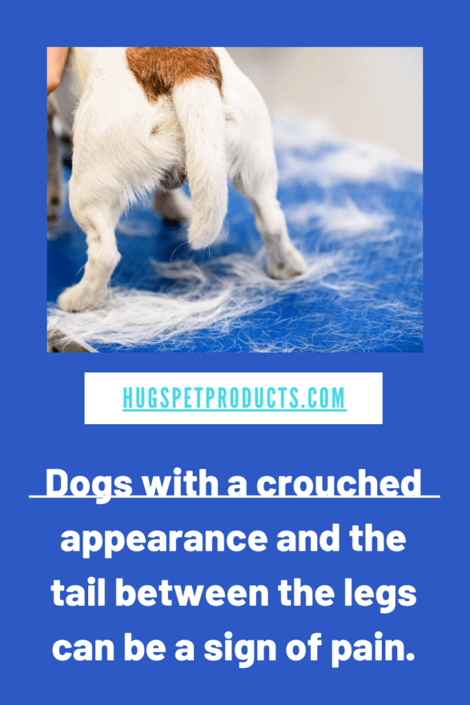 discosponylitis in dogs can be caused by a bacterial infection