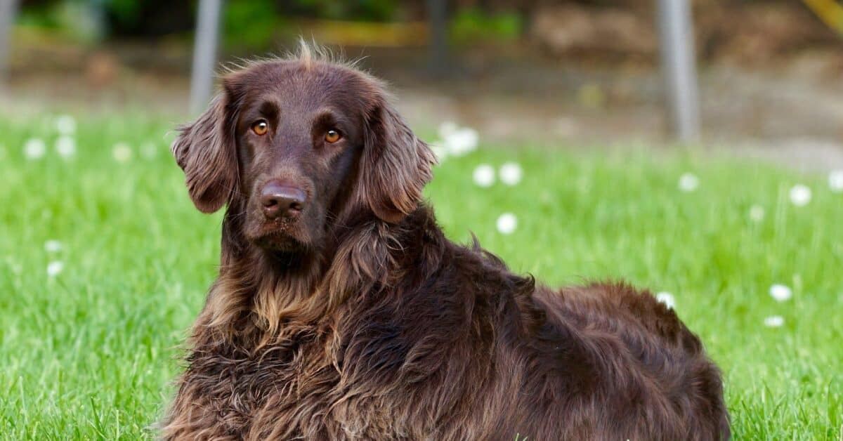 Addison's Disease can occur in any dog