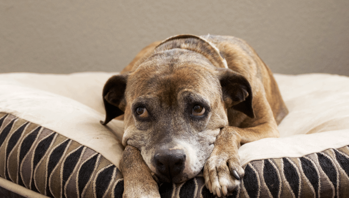 The way to fully eradicate hookworms in dogs is to stop the life-cycle.
