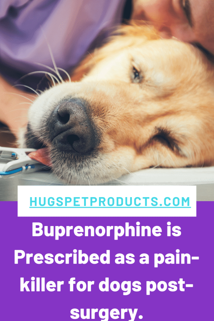 Buprenorphine is prescribed to treat pain in dogs.