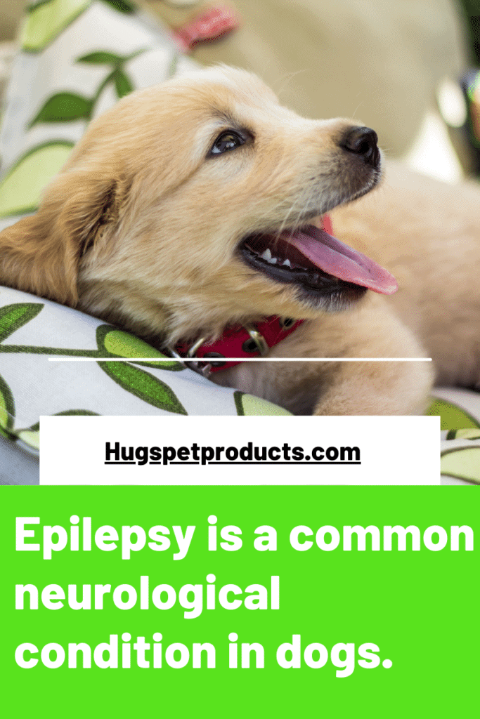 Seizures are common in dogs.